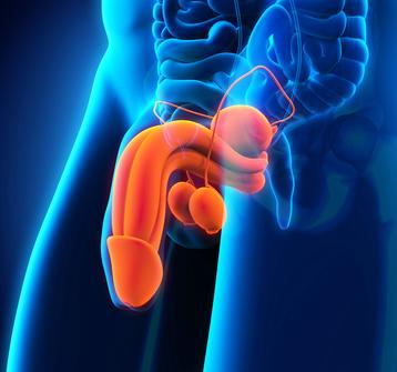 Was ist TESE (TEstikuläre SpermienExtraktion) – Kinderwunsch